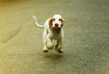 dog! / by Kim