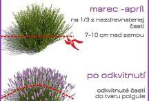 zahradka starostlivost o rastliny