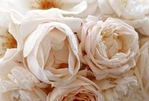 Flowers / Pretty, pretty, pretty