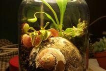 - jar terrarium -