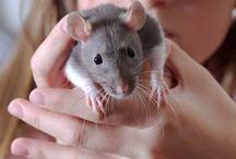 RATS..