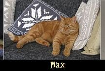 12. CATS ^..^ ♥♥♥ / Big, small, real, weird or with their humans