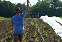 Teen Ag Program / Teen Agriculture Program at Wolfe's Neck Farm in Freeport, Maine