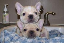 cute animals / adorable pet and animal photos