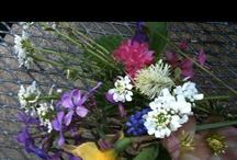 flowers n such / by Kasey Hiatt