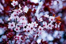 Kwiaty / Będę dodawała bardzo ładne zdjęcia czasem z neta a czasem swoje