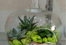 Sukulent /Kaktüs (Isparta Çiçekçi) / Isparta Çiçekçi Sukulent / Kaktüs Aranjmanları, Terrarium vazolarda kaktüsler, Isparta Kaktüs çiçeği gönderimi.  Sukulent nedir?  Sukulent bitkileri kaktüsler ile karıştırılmamalıdır. Neredeyse kaktüslerin tamamı sukulenttir lakin her sukulent kaktüs değildir. Sukulentler bazı kısımları normalden kalın ve etlidir, ve bu sayede su tutarak kurak veya kumlu yerlerde yaşayabilir. Latince sucus kelimesi bitki suyu veya bitki özü anlamına gelir.