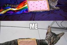 Nyan Cat X3