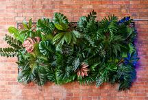 Greenery Screen / At 2.4m x 1.2m make our Greenery Screen the feature at your next event.