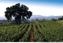 Central Coast Wine / California's Central Coast is home to some of the best wines in the nation. Enjoy sipping on one-of-a-kind wines while taking in the gorgeous local landscape. / by Sunset SAVOR the Central Coast