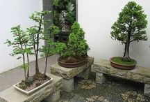 Bonsai display
