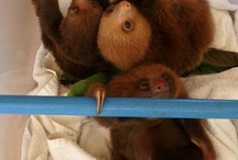 Sloths. Need I say more? / by Jenna Haertle