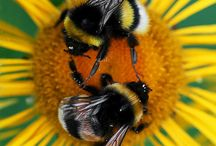 Bees & more stunning insects