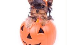 Halloween / by Deceased Pet Care Funeral Homes
