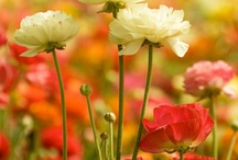 beautiful flowers / by Tina Brown