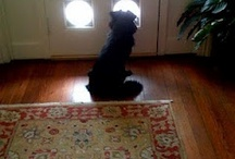 Dog at Door / I love dogs and their faithful companionship. :)