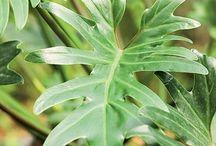 plantas resistentes