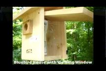 Birdhouses and Feeders / Building birdhouses and feeders.