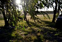 New South Wales Campspiration / Adventures on Private Land
