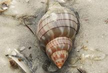 Sea Shells Around the World
