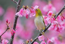 Cara Mudah dan Murah Membuat Nektar Buatan untuk Burung Kicau