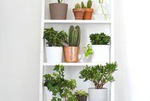 Déco plantes intérieur