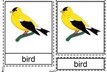 Zoology - Birds