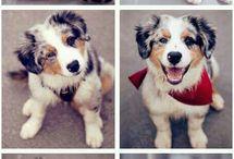 Puppy *