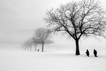 Trees / by Kate Gorman