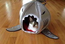 Sharkiness