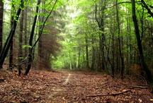 Wald / Bilder aus der Natur.