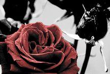 Красное и черное  Red and black / Орхан Памук. Меня зовут красный Я счастлив, что я красный! Цвет — это прикосновение глаза, слова, звучание в темноте.  Orhan Pamuk. My name is Red I am happy that I was red! Color - a touch of the eyes, words, sound in the darkness.