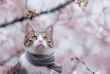 kittens / by Ashley Baxa Haley