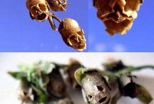 rostliny a semena
