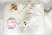 HIGIENE Y SALUD / Productos para una correcta higiene de tu perro
