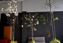 Artful Plants