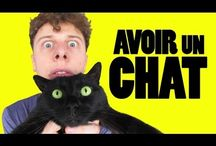 Fr vocab Animaux