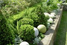Pasujące rośliny