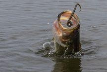 Bass Fishing / Tackle Box