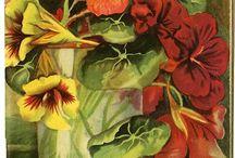 estampas de flores