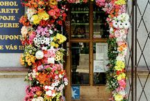Flowers/ Plants