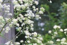 Det hvide bed ved legehuset / Planter i vores bed