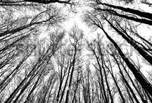 Nature Black White
