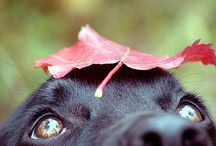 Photography Dogs- tips and tricks
