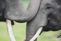 Elefantitos de colores ♥
