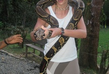 Volunteer with Wildlife / Up, close and personal with some of the worlds most exotic wildlife...
