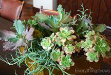 Interior Succulents / Succulents in indoor settings