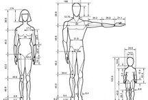 размер тела