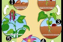 Növény fejlődès