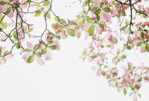 spring / by tichtach